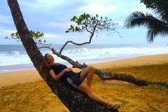 Bild-Panama-Palme-relaxen