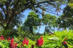 Bild-Panama-Tropische-Natur